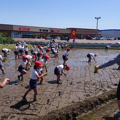 農業と教育4